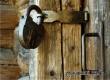 Пожилая аткарчанка закрыла в своем доме работницу «Почты России»