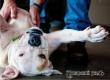 Ветеринары пояснили, почему не надо чесать живот собакам