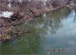 Подъем воды на реках Медведица и Аткара за сутки составил 5 см