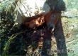 Аткарские спасатели достали упавшую в колодец лошадь