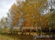 Аткарские поэты посвятили стихи осени и природе родного края