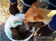 Аткарские спасатели достали из колодца щенков и передали матери