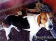 В Аткарском районе ищут хозяина потерявшейся собаки