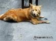 За год в черте Аткарска запланировали отловить 205 бродячих собак