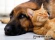 Жителей РФ могут обязать маркировать животных за свой счет