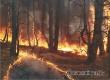 В Аткарском районе из-за неосторожности с огнем горело 7 гектаров леса