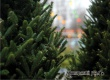 В Аткарске с 16 декабря начнут работать елочные базары