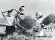 90 лет назад в Аткарске был создан колхоз «Культурный пахарь»