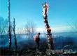 У Новой Осиновки произошел ландшафтный пожар площадью 1 гектар