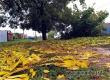 В первые дни октября сохранится сухая и относительно теплая погода