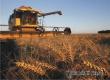 Аткарский район вошел в десятку лидеров по урожаю зерна в регионе