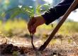 В этом году в Аткарске высадят 260 деревьев и 170 кустарников