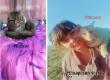 Сельчане организовали фотоконкурс ко Всемирному дню кошек