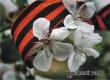 Погода на праздники: теплая Пасха с грозой и жаркий День Победы