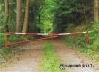 Жителям Аткарского района запретили посещение лесов