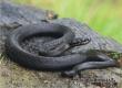 Аткарчанам напомнили меры предосторожности при встрече со змеями