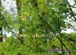 В Саратовскую область идут ливневые дожди с грозами